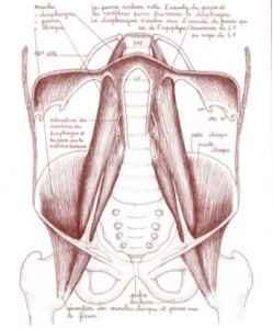 anatomie-respiration-sophrologie