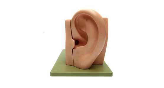 acouphènes sophrologie coupe oreille